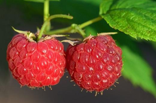 rapsberry pi